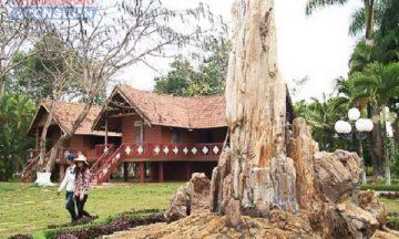 Cây gỗ hóa thạch